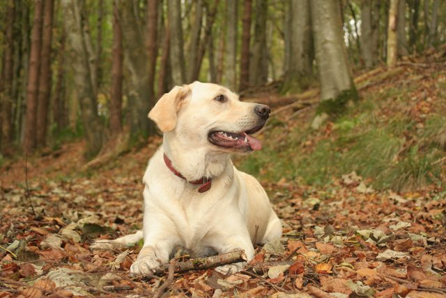alison pope dare2thinkbig dog training 8