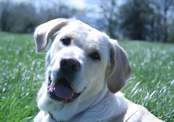 alison pope dare2thinkbig dog training 1